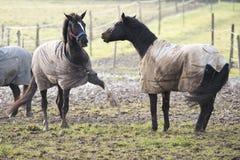 Émotion de cheval Photographie stock