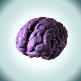Émotions, concepts, idées et pensées sur un cerveau de femmes roses Photos stock