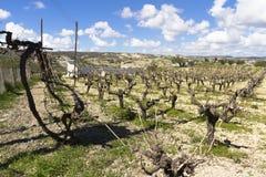 Énergie de vignoble, de soleil, solaire et éolienne, Chypre Photos libres de droits