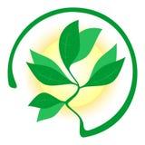 Énergie organique Photographie stock