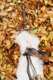 Épée sur le fond de feuilles Photographie stock libre de droits