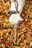 Épée sur le fond de feuilles Images stock