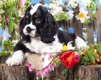 Épagneul et fleurs de chiot Photographie stock libre de droits