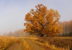 Épagneul rouge dans la forêt d'automne Image libre de droits