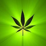 Épanouissement rougeoyant de symbole de lame de cannabis illustration de vecteur
