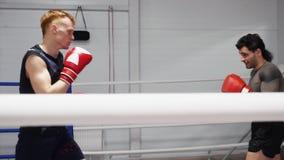 Épargner s'exerçant des boxeurs de combattants dans des gants de boxe sur des premiers rangs dans le club de combat banque de vidéos