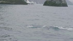 Épaulards nageant et plongeant dans l'eau d'océan sur le paysage de montagne et de falaise banque de vidéos