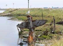 Épave de bateau sur la côte de la Mer du Nord, R-U Photographie stock libre de droits