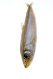 éperlan de poissons de bougie Photographie stock libre de droits
