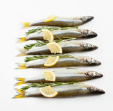Éperlan de poissons de mer mariné avec le romarin et le citron Images stock