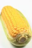 Épi de blé Image stock
