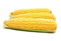 Épi de blé Images libres de droits