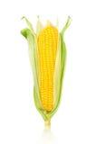 Épi de blé d'isolement sur un fond blanc Photographie stock libre de droits