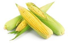 Épi de blé frais Photographie stock libre de droits