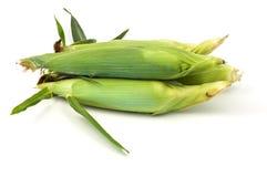 Épi de maïs Photos libres de droits