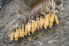 Épi de maïs photos stock
