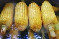 Épi de maïs bouilli Photos stock