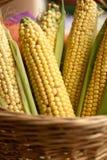 Épi de maïs cru Photographie stock libre de droits