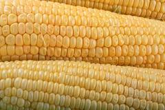 Épi de maïs frais photos stock