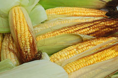 Épi de maïs frais Photo stock