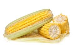 Épi de maïs frais avec des gouttelettes d'eau Images stock