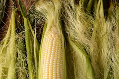 Épi de maïs horizontal Image stock
