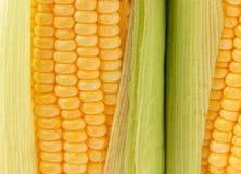 Épi de maïs mûr Photographie stock libre de droits