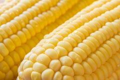 Épi de maïs mûr Image stock