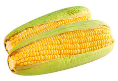 Épi de maïs mûr Photos libres de droits