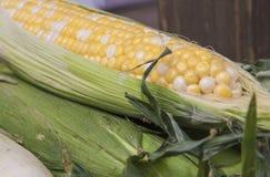 Épi de maïs organique frais Photo stock