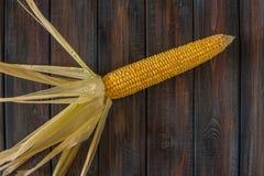 Épi de maïs Maïs sur la table Photographie stock