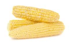 Épi de maïs trois jaune mûr image libre de droits