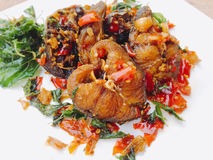 Épicé frit par poisson-chat Image stock