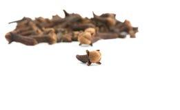 Épice de clous de girofle Photographie stock libre de droits