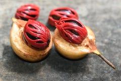 Épice de noix de muscade d'Inde du Kerala Photos stock
