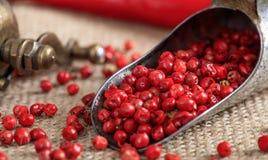 Épice sèche de poivron rouge Photos stock