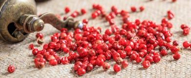 Épice sèche de poivron rouge Images libres de droits