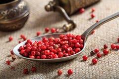 Épice sèche de poivron rouge Photographie stock libre de droits