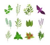Épices d'herbes de couleur de bande dessinée réglées Vecteur illustration stock