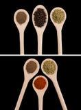 Épices dans des cuillères en bois (poivre, origan, paprika) Photos libres de droits