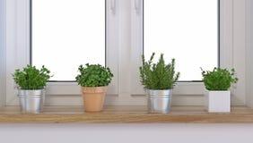Épices dans un pot sur un filon-couche de fenêtre illustration de vecteur
