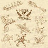 Épices du Caucase Une collection de illustration libre de droits