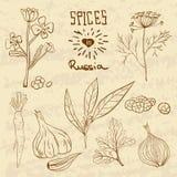 Épices en Russie Une collection de distinctif illustration de vecteur