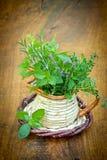 Épices et herbes fraîches Photographie stock libre de droits