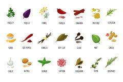 Épices et icônes de vecteur d'assaisonnement D'isolement sur l'herbage blanc de bande dessinée Ingrédients de nourriture pour la  Images stock
