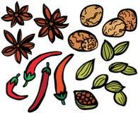 Épices fraîches réglées Photo libre de droits