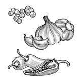 Épices Poivre noir, poivre de piment, ail D'isolement sur le fond blanc illustration stock