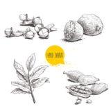 Épices tirées par la main de croquis réglées La baie laisse la branche, les noix de muscade, les cardamomes et les clous de girof illustration stock
