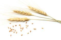 Épillets de blé d'isolement sur le fond blanc Vue supérieure Photographie stock libre de droits