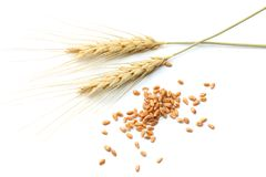Épillets de blé d'isolement sur le fond blanc Vue supérieure Photo libre de droits
